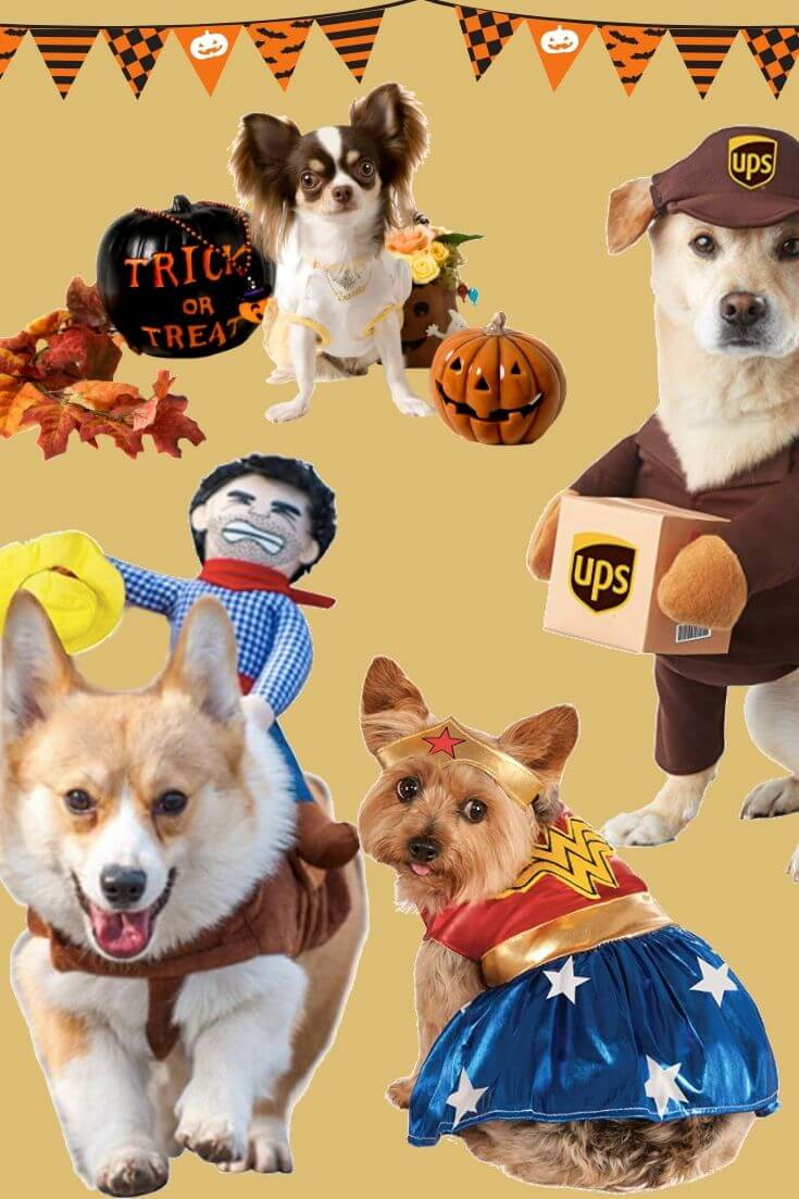 Super Cute Halloween Costumes for Dogs You Will Love 2 of 5